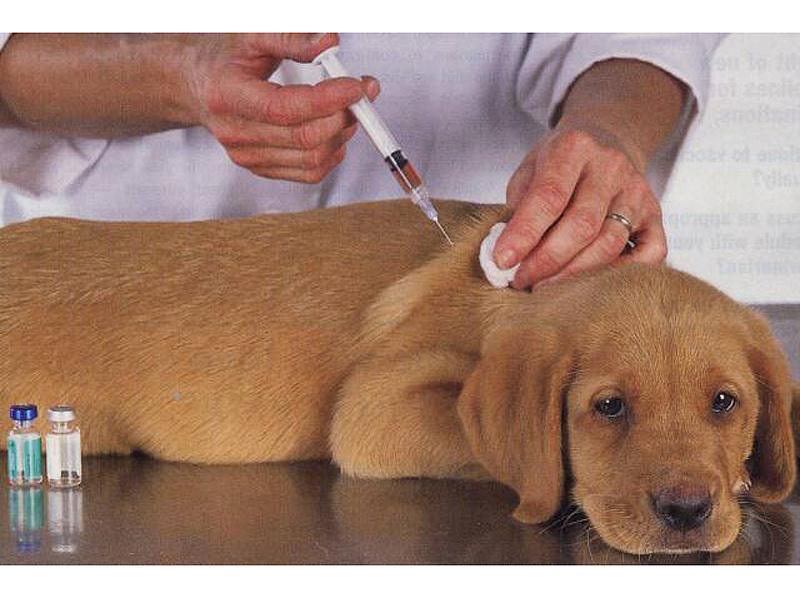 Высокий подготовка к прививке собаке термобелье